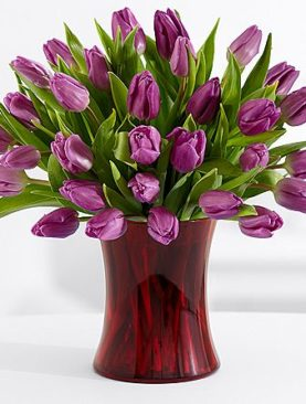 30 Purple Tulips