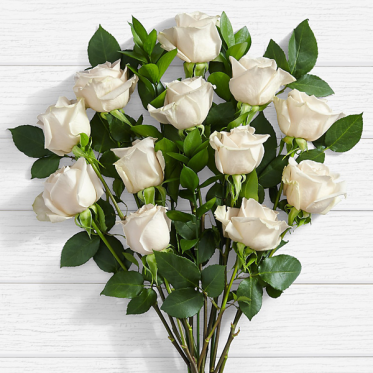 10 Long Stemmed White Roses - Send White Flowers to Lahore Pakistan - Proflowers.pk