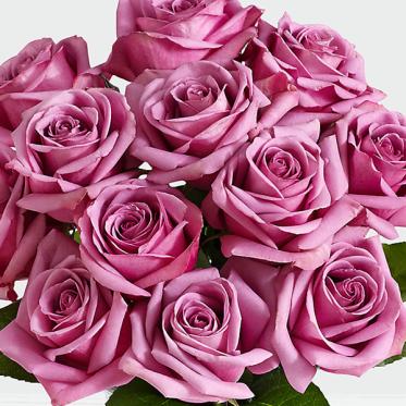 Happiness Purple - Send Online Flowers to Pakistan - Proflowers.pk