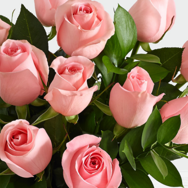 Pink Sapphire Wishes Flowers - Pink Flowers Delivery Online - ProFlowers.pk