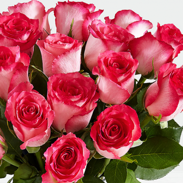 20 Pink Pearl Roses -Birthday Roses Online Delivery Pakistan - ProFlowers.pk