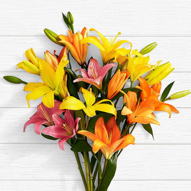Birthday Lilies - Send Flowers to Pakistan Online - Proflowers.pk