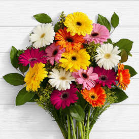 Colorful Birthday Daisies - Send flowers to Pakistan - Proflowers.pk