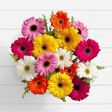 Colorful Birthday Daisies - Send flowers to Pakistan - Proflowers.pk